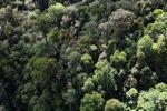 Borneo rainforest -- sabah_0986