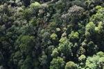 Borneo rainforest -- sabah_0987