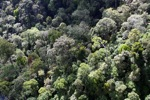 Borneo rainforest -- sabah_0988