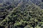Borneo rainforest -- sabah_0989