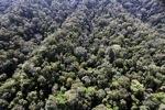 Borneo rainforest -- sabah_0990