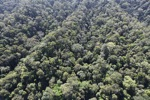 Borneo rainforest -- sabah_0991