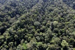 Borneo rainforest -- sabah_0992