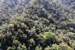 Borneo rainforest -- sabah_0993