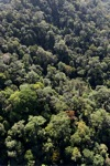 Borneo rainforest -- sabah_0994