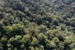 Borneo rainforest -- sabah_0995