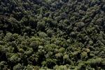 Borneo rainforest -- sabah_0996