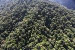 Borneo rainforest -- sabah_0997