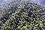 Borneo rainforest -- sabah_0998