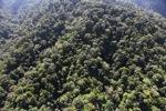 Borneo rainforest -- sabah_1000