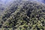 Borneo rainforest -- sabah_1001