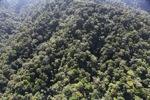 Borneo rainforest -- sabah_1002