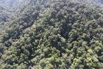 Borneo rainforest -- sabah_1003