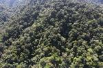 Borneo rainforest -- sabah_1004