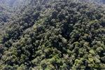 Borneo rainforest -- sabah_1005