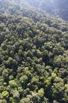 Borneo rainforest -- sabah_1006