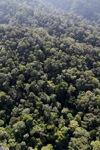 Borneo rainforest -- sabah_1007