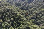 Borneo rainforest -- sabah_1008