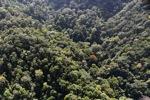 Borneo rainforest -- sabah_1009