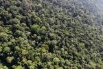 Borneo rainforest -- sabah_1010
