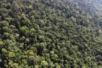 Borneo rainforest -- sabah_1011