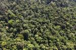 Borneo rainforest -- sabah_1012