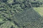 Oil palm plantation -- sabah_1022