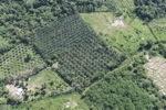 Oil palm plantation -- sabah_1023