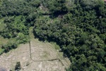 Rice paddies and rainforest -- sabah_1024