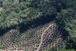Oil palm plantation -- sabah_1027