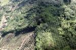 Oil palm plantation -- sabah_1028