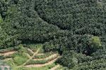Oil palm plantation -- sabah_1029