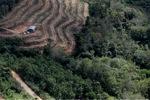 Oil palm plantation -- sabah_1032