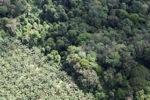 Oil palm plantation -- sabah_1036