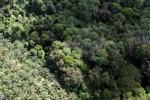 Oil palm plantation -- sabah_1037