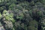 Borneo rainforest -- sabah_1038
