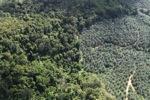 Oil palm plantation -- sabah_1039