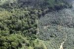 Oil palm plantation -- sabah_1041