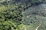 Oil palm plantation -- sabah_1043