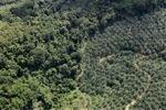 Oil palm plantation -- sabah_1044