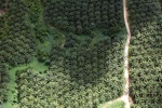 Oil palm plantation -- sabah_1047