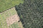 Oil palm plantation -- sabah_1055