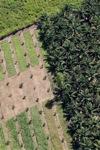 Oil palm plantation -- sabah_1058