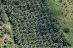 Oil palm plantation -- sabah_1059