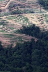 Deforestation for oil palm -- sabah_1062