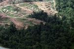 Deforestation for oil palm -- sabah_1063