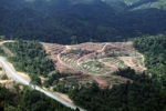 Deforestation for oil palm -- sabah_1064