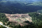Deforestation for oil palm -- sabah_1066