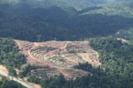 Deforestation for oil palm -- sabah_1067