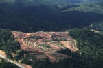 Deforestation for oil palm -- sabah_1068